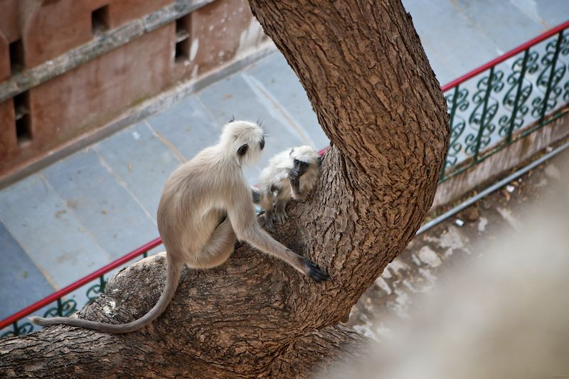 you little monkey