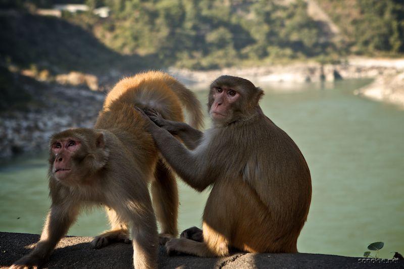 friendly grooming